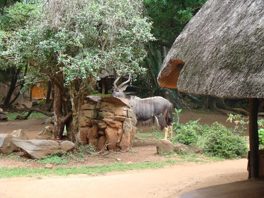 8 dingen die je moet weten over kruger park reishonger nlSlapen In Krugerpark.htm #6