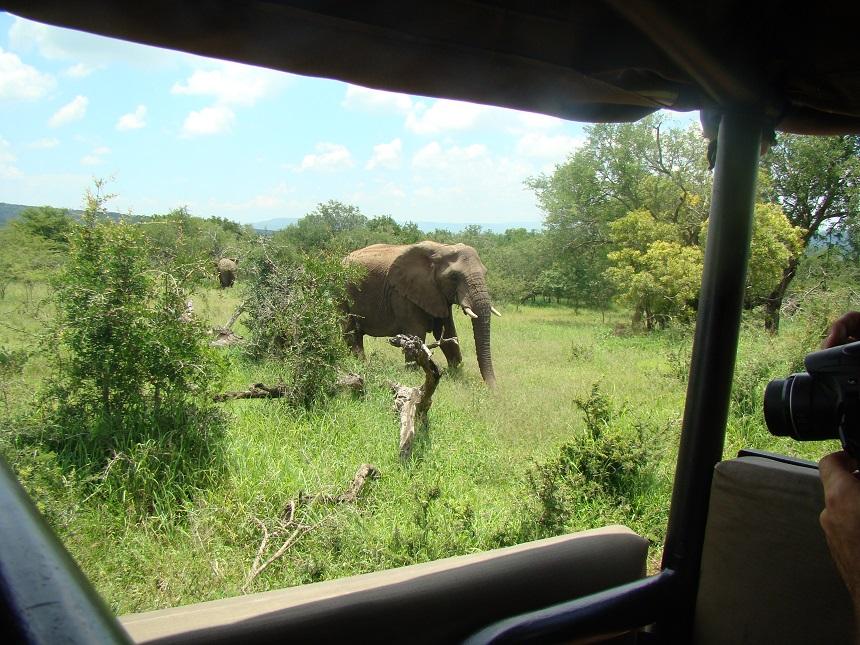 olifanten jeep