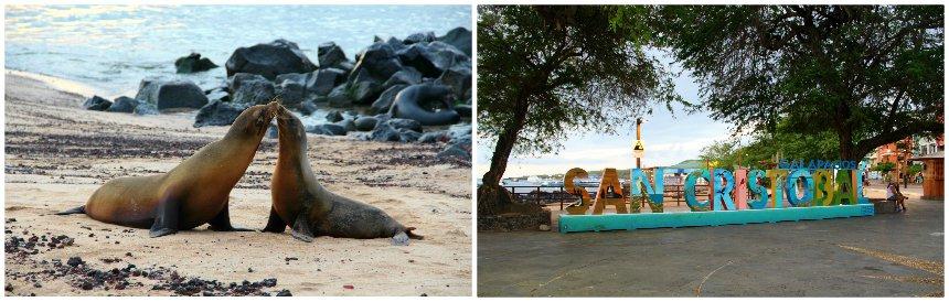 Zeeleeuwen op San Cristóbal op de Galapagos eilanden
