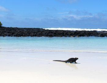 Eilandhoppen op de Galapagos