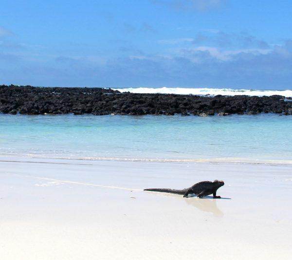 Eilandhoppen op de Galapagos eilanden