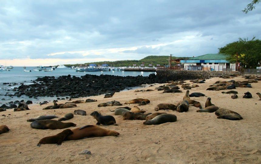 San Cristóbal is het zeeleeuweneiland van de Galapagos