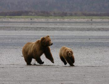 Alaska beren spotten: de beste plek