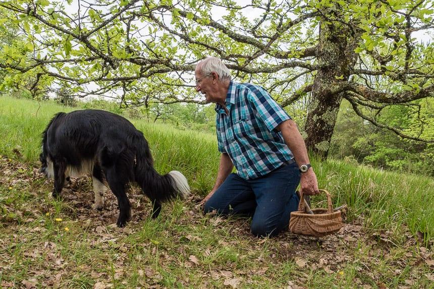 Hond op zoek naar truffels