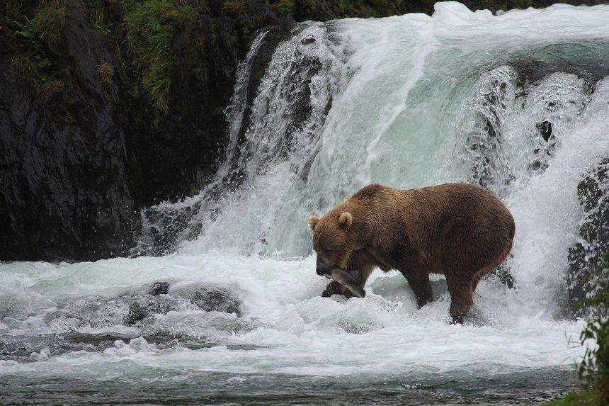 beren spotten alaska