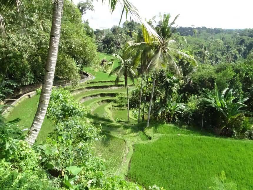 Tegalalang rijstvelden. Wèl toeristisch.