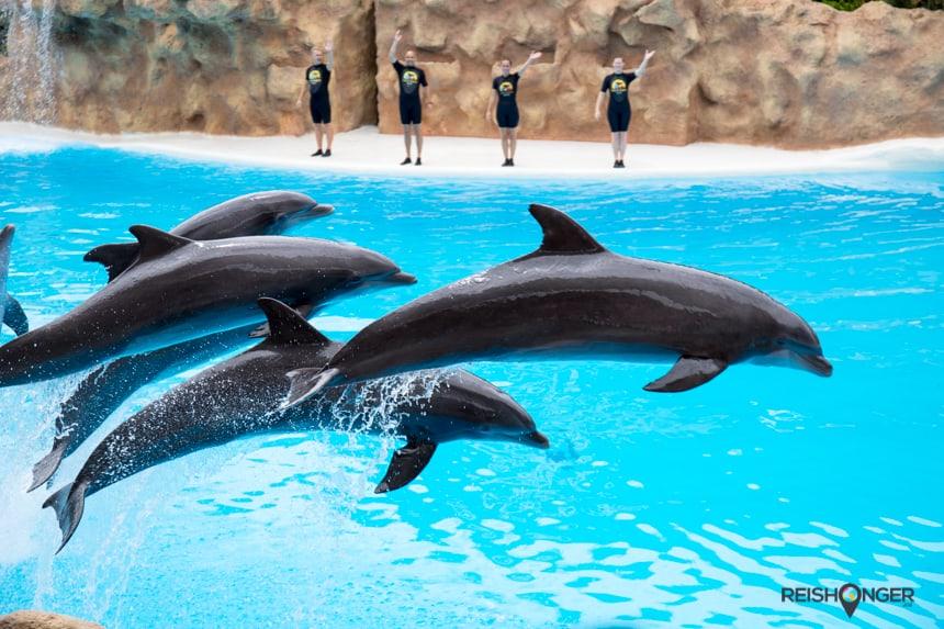 De dolfijnenshow van Loro Parque schijnt bij de beste ter wereld te horen