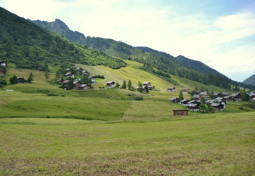 De lama's staan in de zomer in de alpenweiden van het dorp Malbun in Liechtenstein