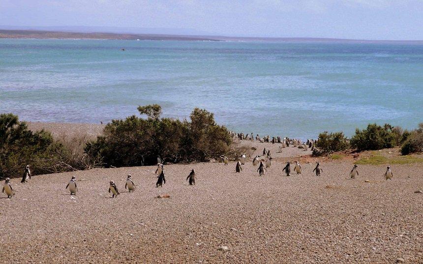 Pinguïn Highway op Punta Tomba