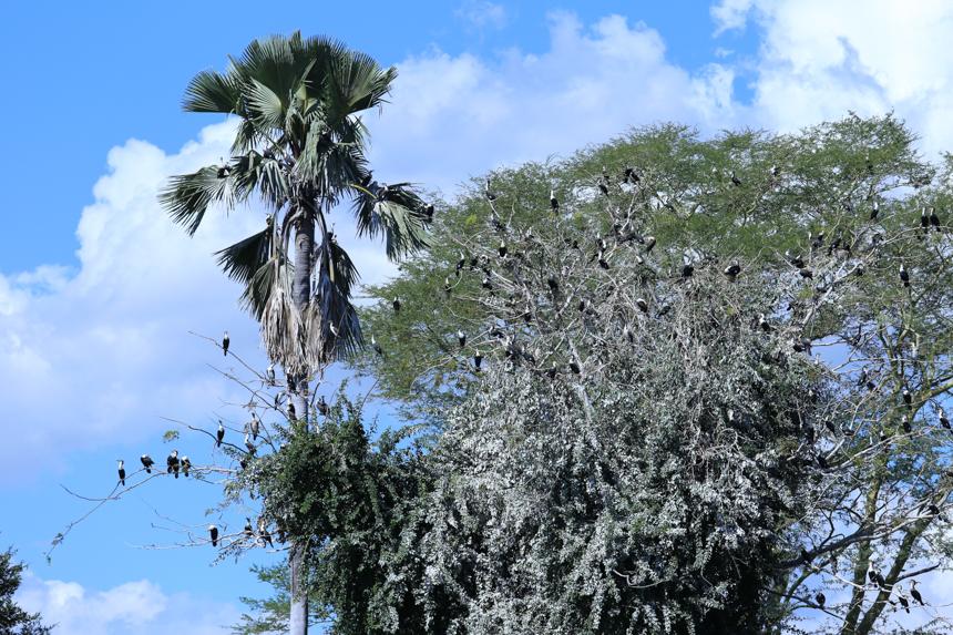 Het vogelrijk is aardig vertegenwoordigd in Liwonde