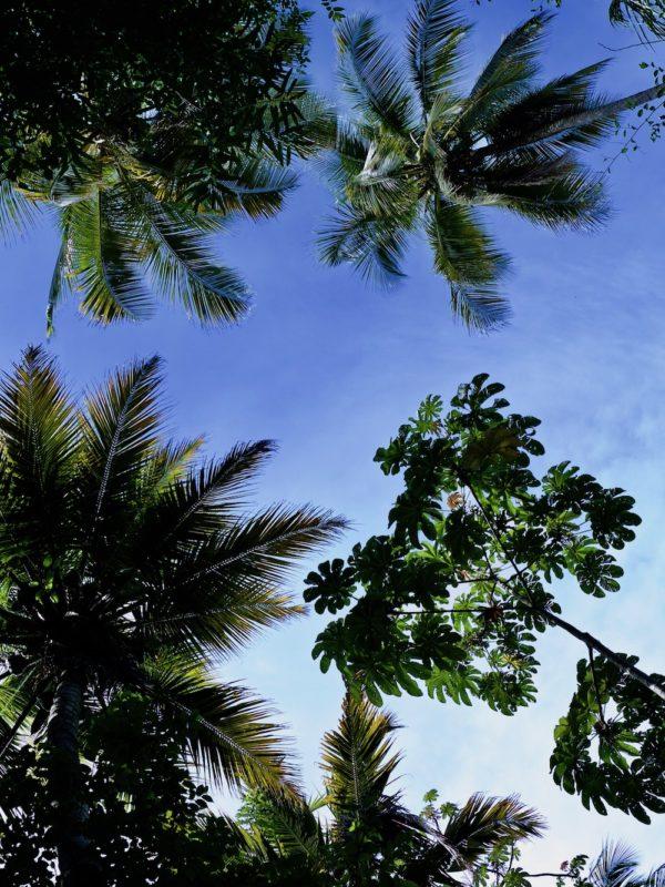 Caribisch Colombia met Tayrona National Park, Santa Marta, Minca, Costeño Beach en Palomino