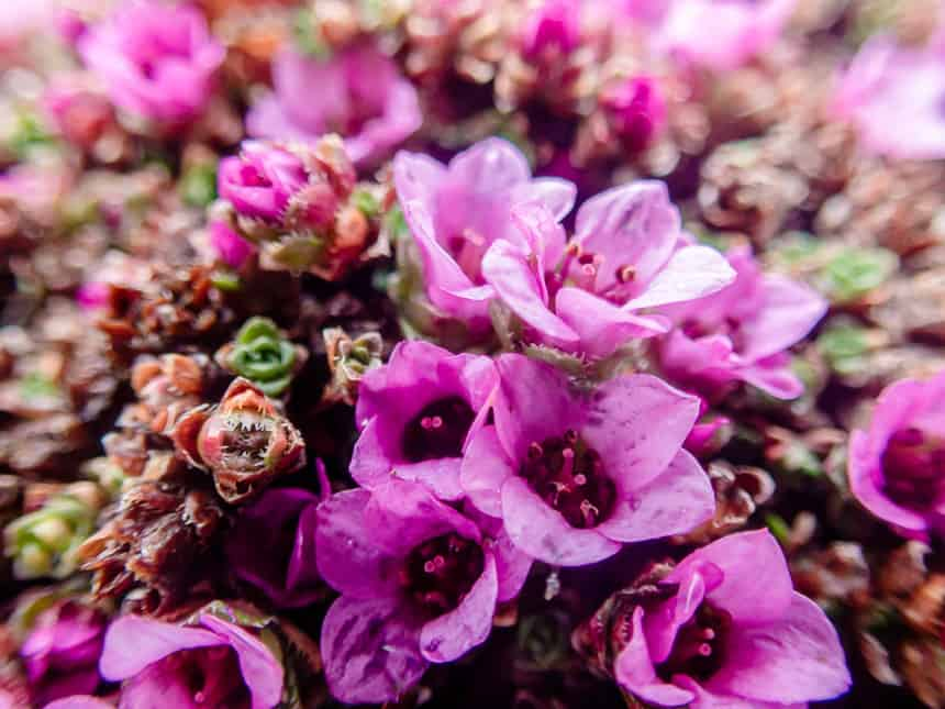 Bloemenpracht op Bereneiland