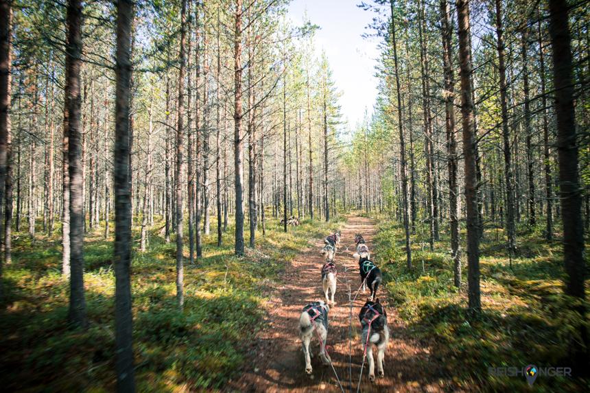 Zomerslee in Zweeds Lapland