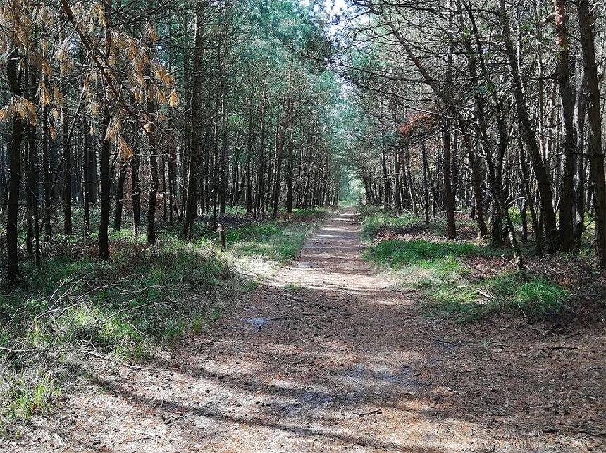 Bos in het najaar op de Veluwezoom