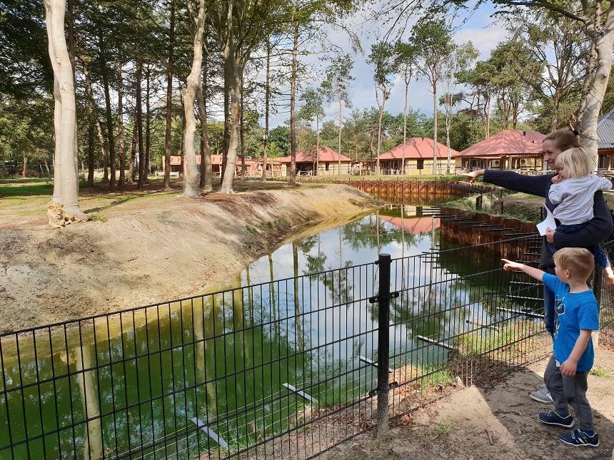 Safari Resort bij de leeuwen