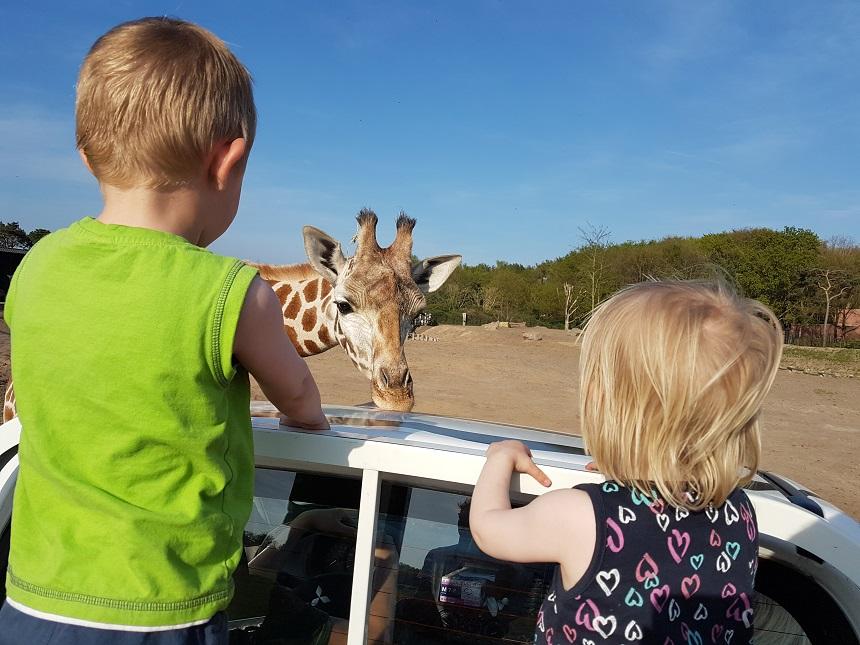 safari op beekse bergen