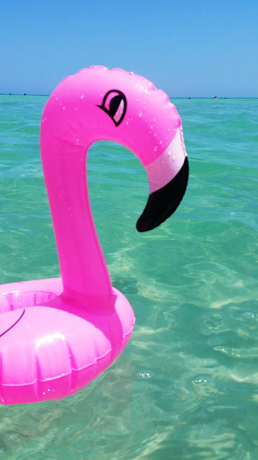 Flamingo island tunesië