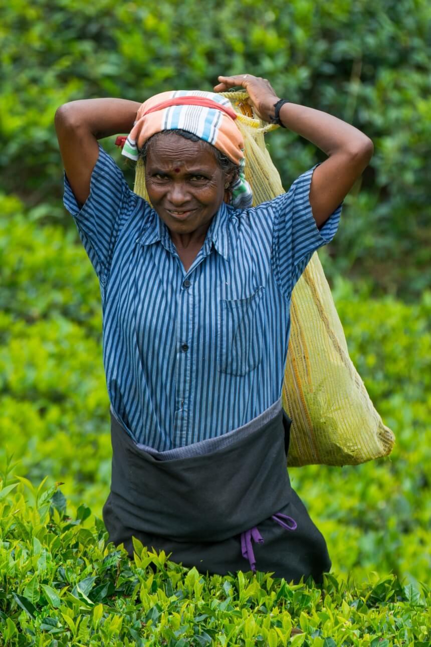Vrouw aan het werk op de theeplantages in Sri Lanka
