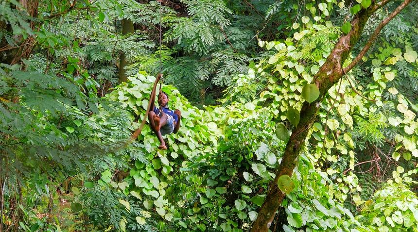 Zipline op het eiland Mahé, bij het resort Constance Ephelia. Als tarzan door de jungle.