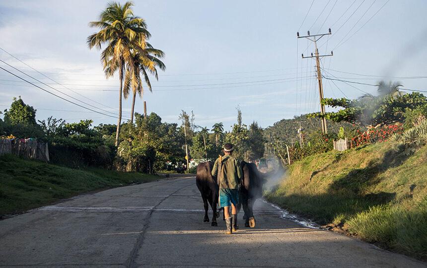 Paardenkar in Cuba