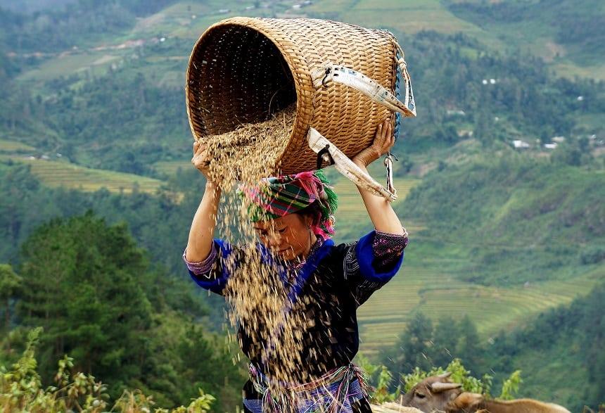 Landarbeider in Sapa, Vietnam