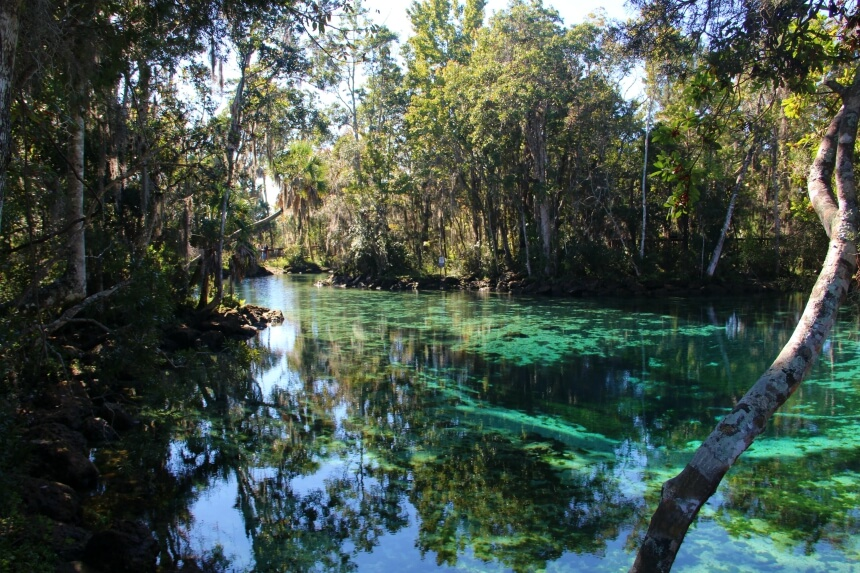 In het heldere water van Crystal River komen zeekoeien graag overwinteren