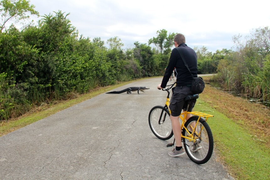 Spectaculair: fietsen langs alligators in Everglades National Park