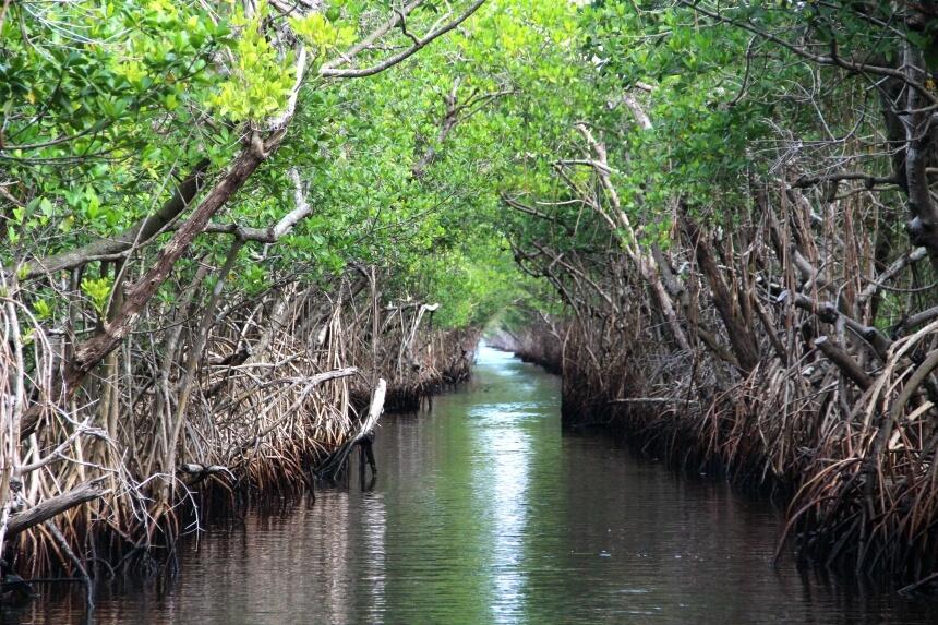 Maak een airboat tour door de smalle mangrove van de Florida Everglades