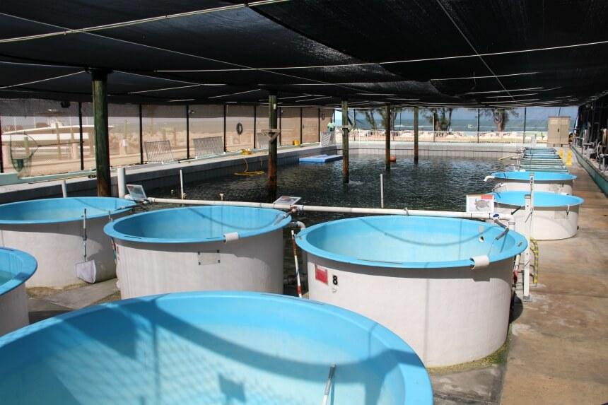 Individuele bassins met nieuw binnengebrachte of ernstig gewonde zeeschildpadden