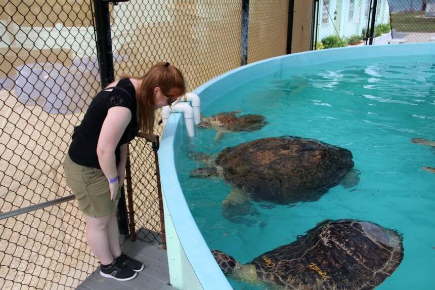 Een bijzondere ontmoeting: op ziekenbezoek bij zeeschildpadden