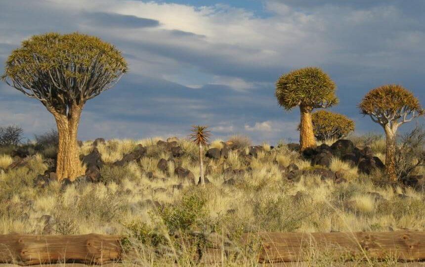 De Kalahari in Namibië