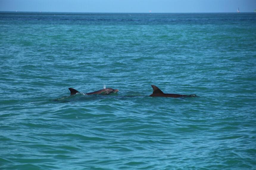 Dolfijnen spotten met Fury Water Adventures in Key West