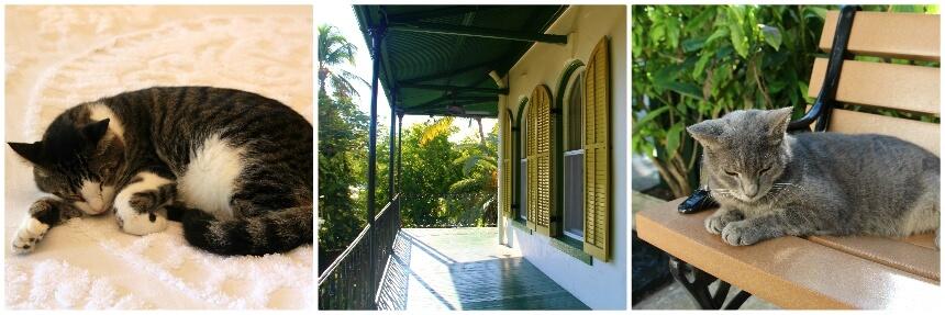 Ga op bezoek bij de katten van Hemingway in Key West