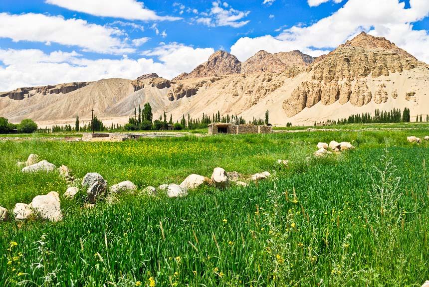 Ladakh - Groene oases in een dor landschap
