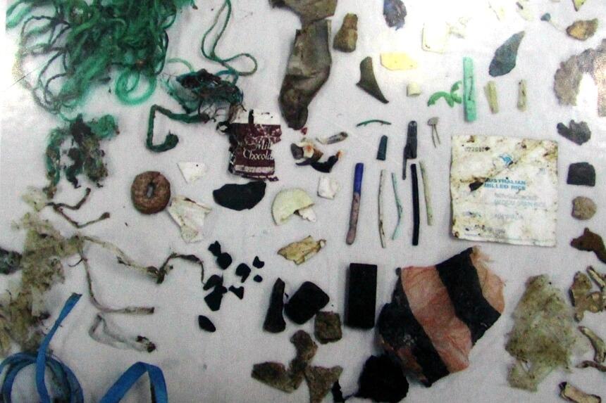 Schokkend: al dit plastic afval werd in één zeeschildpad aangetroffen