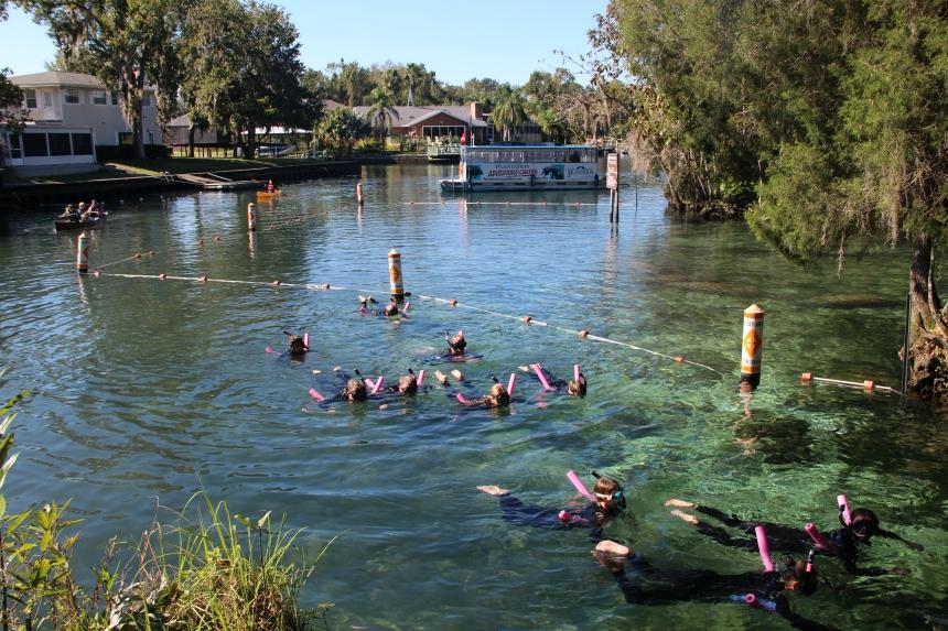 Three Sisters Springs is een populaire plek om te snorkelen of kajakken