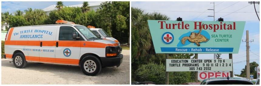 Op ziekenbezoek bij zeeschildpadden in Florida