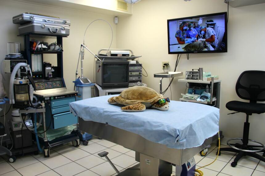 Het Turtle Hospital heeft veel apparatuur die je kent van normale ziekenhuizen