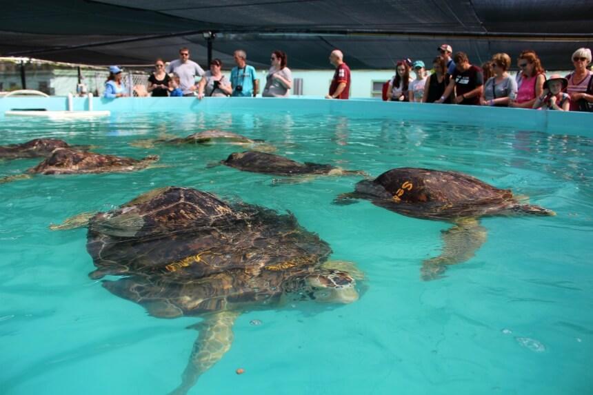 De permanente bewoners zwemmen gezellig samen in één groot bassin