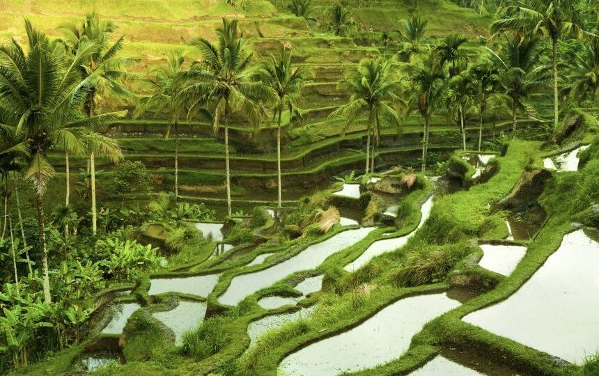 Rijstterrassen in Ubud in Indonesië