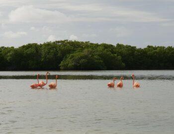 Flamingo's, krokodillen en roze meren