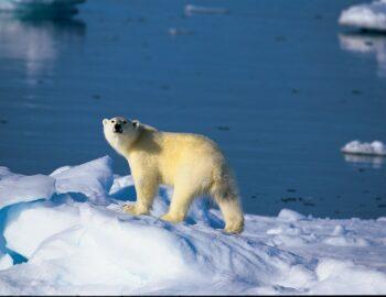 Spitsbergen: walvissen spotten, beste reistijd & meer…