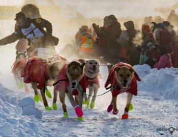 De harde honden van de Yukon Quest