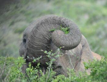 Achter de schermen in de wildparken van de Oost-Kaap