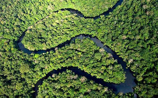 Amazone regenwoud Ecuador