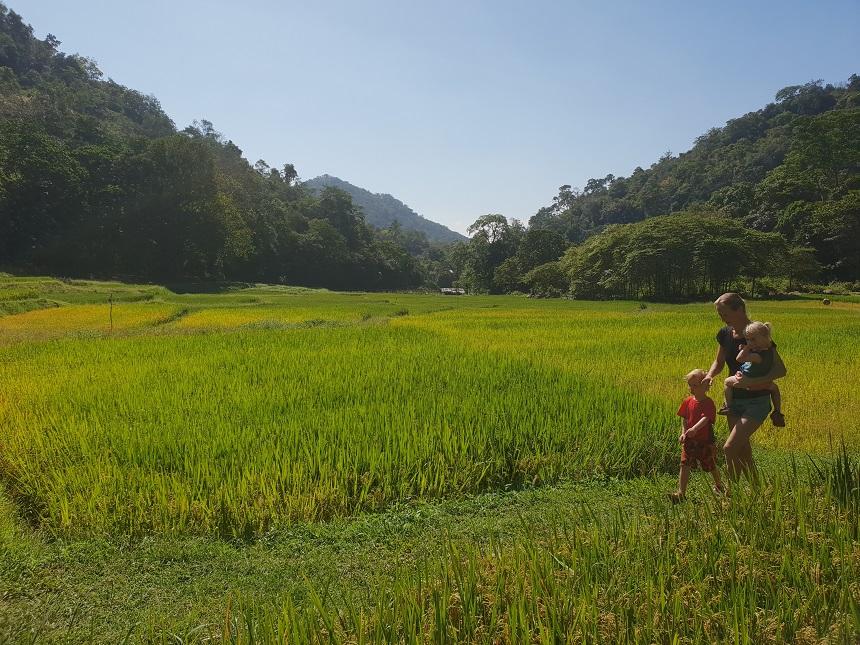 rijstvelden ella jungle resort