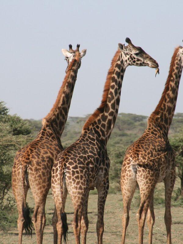 Natuurparken Rwanda