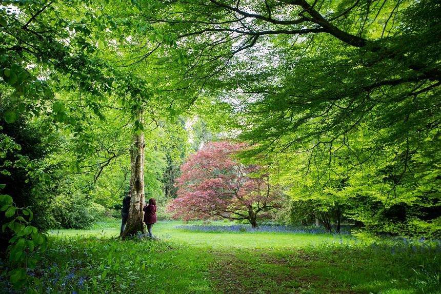 Magische kleuren in de bomentuin van Westonbirt National Arboretum