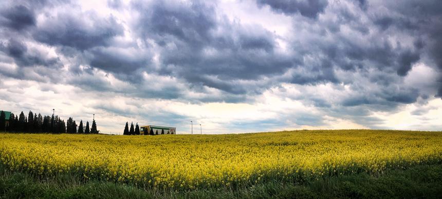 Zuid-Polen: het zonlicht gevangen in het koolzaad