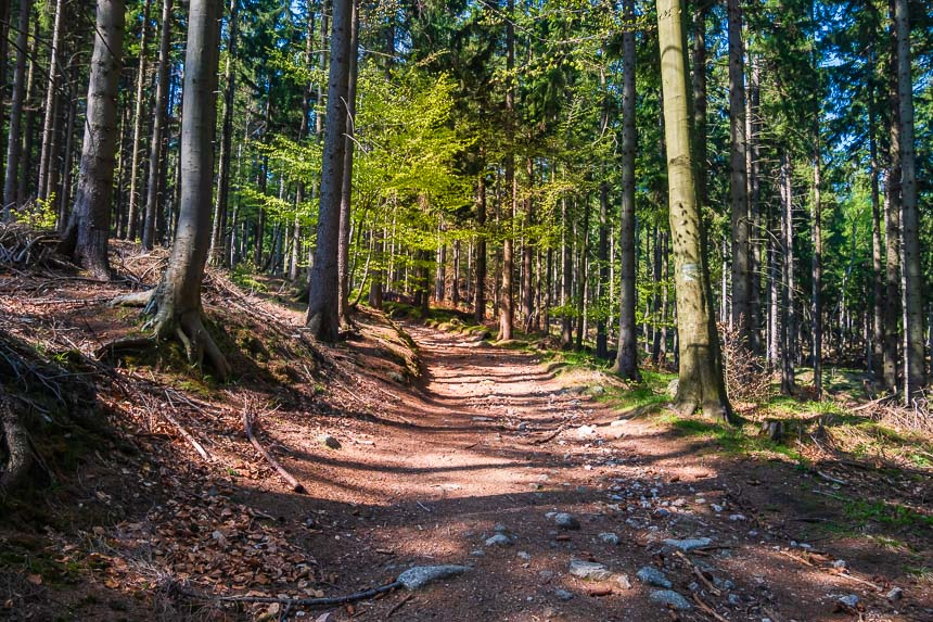 Sniezne Kotly, een ruig bos met slanke bomen